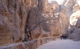 GIORDANIA PETRA 17-25 feb 2008 (252)
