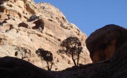 GIORDANIA PETRA 17-25 feb 2008 (373)